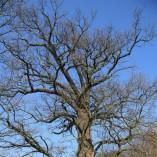 Plocha budoucí zahrady - Z třístaletého obra i dubového lesíka v pozadí listí opadává