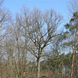 Plocha budoucí zahrady - Z větších náletů je aspoň trochu dřeva