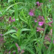 Květen v Toušeňské zahradě -