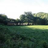 Podzim 2012 v sadu -