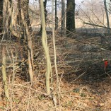 Budování Toušeňské zahrady - Provizorní plot z vyřezaných náletů