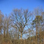 Budování Toušeňské zahrady - ...nálety dosahují značných rozměrů,...